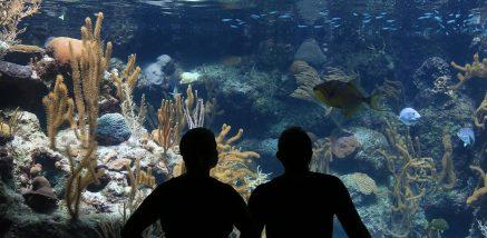 Visuel de la référence web : Aquamax